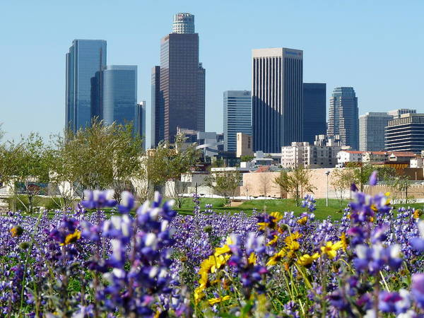 Photograph - Los Angeles Skyline by Jeff Lowe