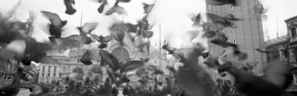 Wall Art - Photograph - Low Angle View Of A Flock Of Pigeons by Panoramic Images