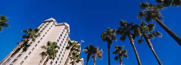 Silicon Valley Wall Art - Photograph - Low Angle View Of Palm Trees In Front by Panoramic Images