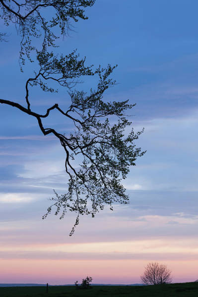 County Antrim Wall Art - Photograph - Low Angle View Of Tree At Dawn, Dark by Panoramic Images