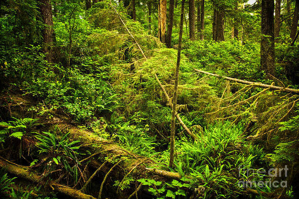Hemlock Photograph - Lush Temperate Rainforest by Elena Elisseeva