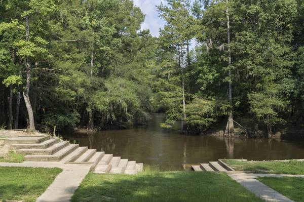 Photograph - Lynches River County Park by MM Anderson