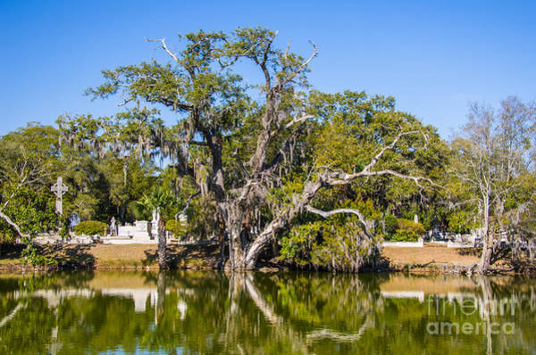 Photograph - Magnolia Cemetery by Dale Powell