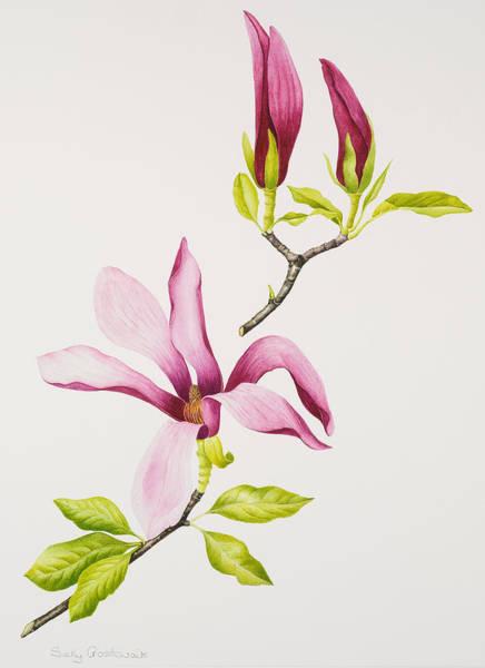 Twig Painting - Magnolia by Sally Crosthwaite