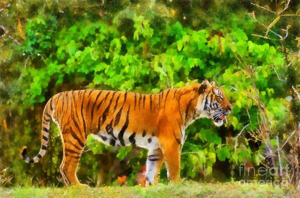 Photograph - Malayan Tiger by Les Palenik