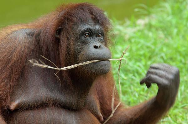 Mature Adult Photograph - Malaysia, Borneo, Sabah, Kota Kinabalu by Cindy Miller Hopkins