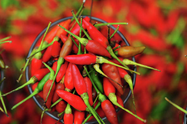 Southeast Asia Wall Art - Photograph - Malaysia, Borneo, Semporna, Red Chili by Anthony Asael