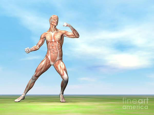 Muscle Tissue Digital Art - Male Musculature In Fighting Stance by Elena Duvernay
