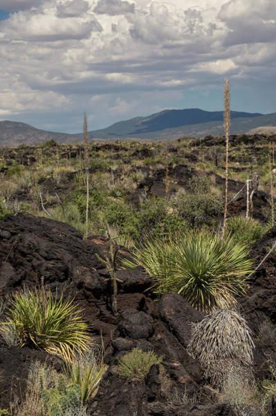 Chihuahuan Desert Photograph - Malpais Lava Flow by Jim West/science Photo Library