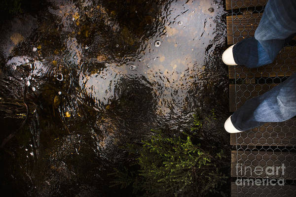 Dreary Photograph - Man Standing On A Rainforest Boardwalk by Jorgo Photography - Wall Art Gallery