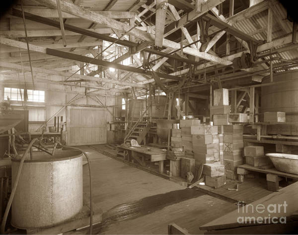Photograph - Manteca Packing Company Interior California Circa 1920 by California Views Archives Mr Pat Hathaway Archives