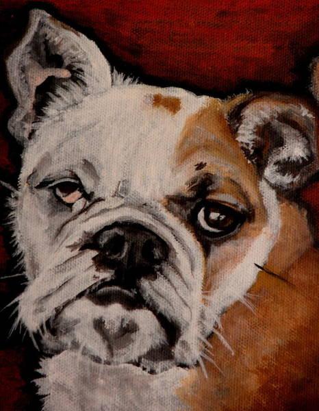 English Bulldog Painting - Max by Carol Russell