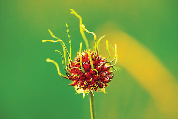 Photograph - Medusapod by David Davies