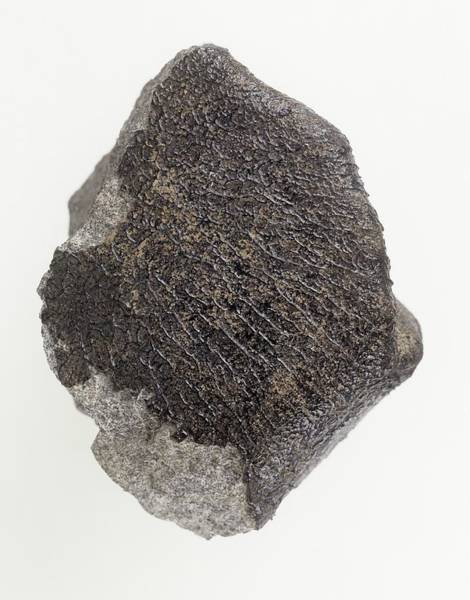 Dense Photograph - Meteorite by Natural History Museum, London/science Photo Library