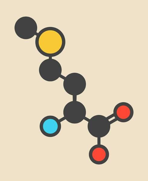 Met Photograph - Methionine Amino Acid Molecule by Molekuul