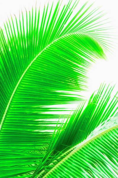 Wall Art - Photograph - Mexico, Yucatan, Palm Leaves by Tetra Images