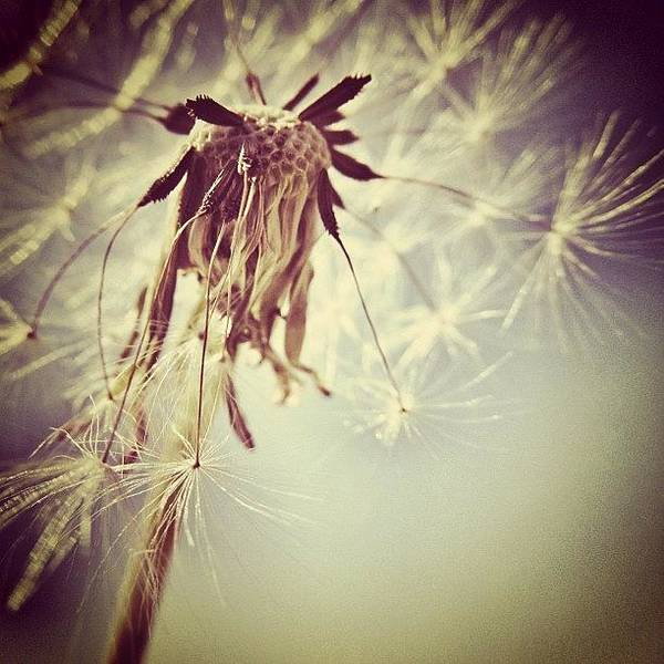 Sky Wall Art - Photograph - #mgmarts #dandelion #makeawish #wish by Marianna Mills