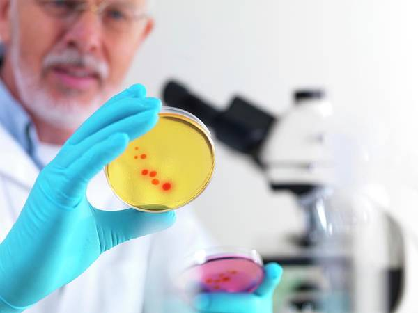 Examine Photograph - Microbiology Research by Tek Image/science Photo Library