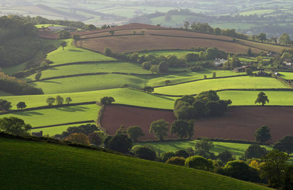 Photograph - Mid Devon Fields by Pete Hemington
