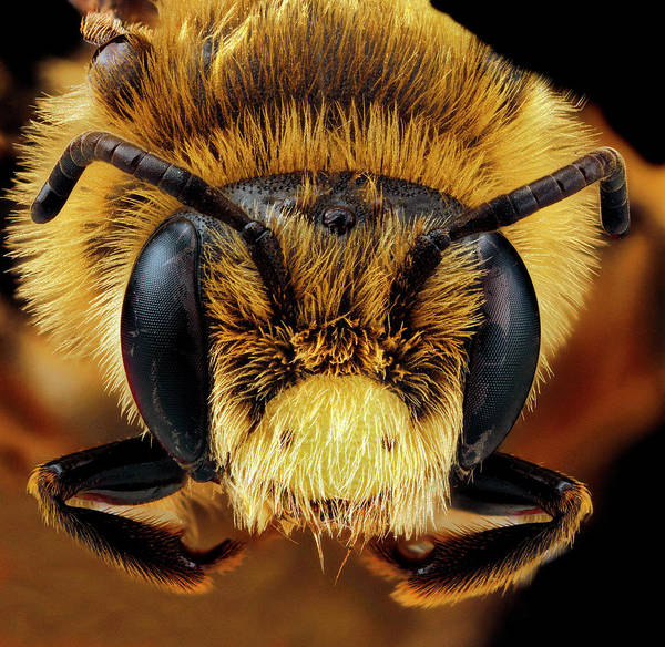 Image Stacking Photograph - Mining Bee by Us Geological Survey