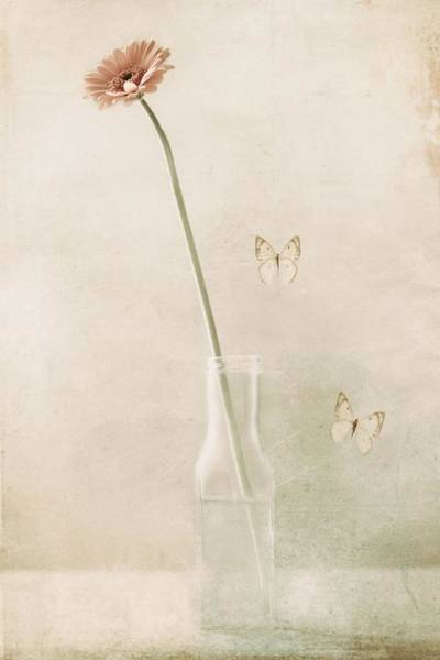 Vases Photograph - Miss Daisy by Delphine Devos