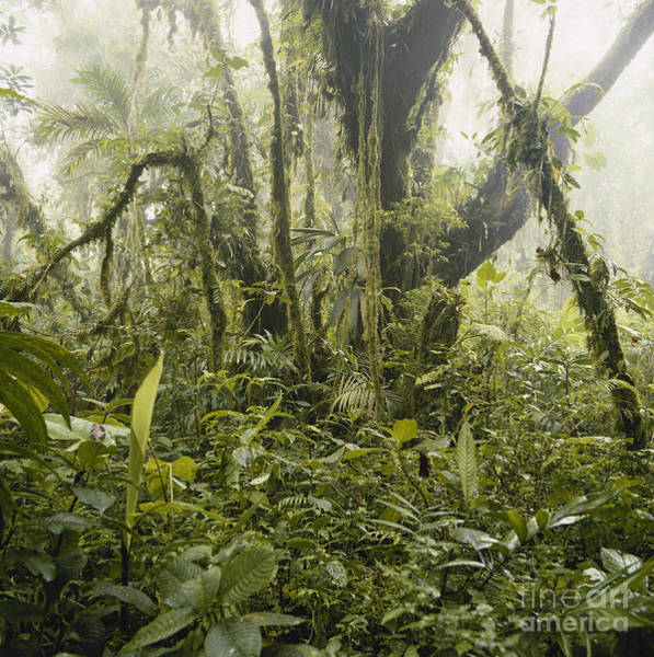 Photograph - Misty Cloud Forest by Gregory G Dimijian MD