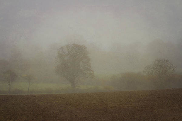 Photograph - Misty  Morning. by Clare Bambers