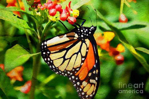Photograph - Monarch Wc by Ken Williams