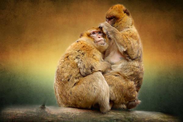 Mammal Mixed Media - Monkeys by Heike Hultsch