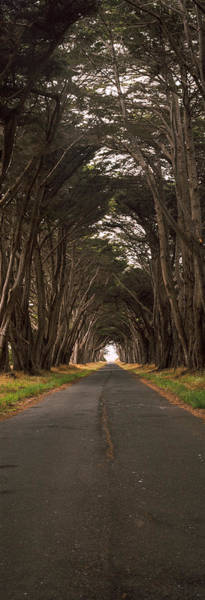 Monterey Cypress Photograph - Monterey Cypress Tree Tunnel by Panoramic Images