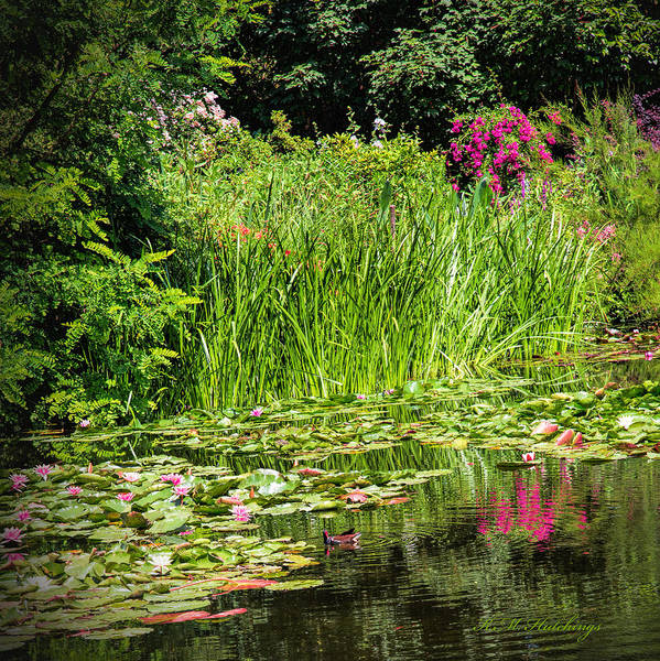 Wall Art - Photograph - Monte's Water Garden by Keith Hutchings