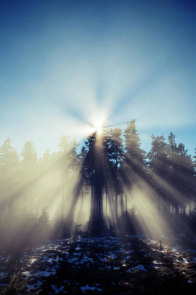 Setting Photograph - Morning Fog, Sunbeams In Forest by Ollo