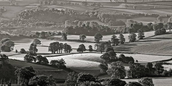 Photograph - Morning Light On Fields by Pete Hemington