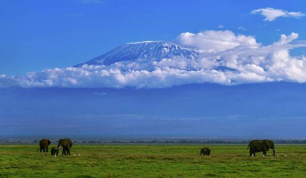 Amboseli Wall Art - Photograph - Mount Kilimanjaro by Babak Tafreshi