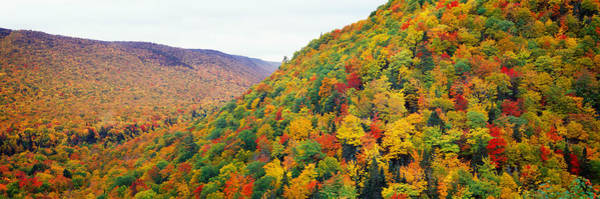 Peacefulness Photograph - Mountain Forest In Autumn, Nova Scotia by Panoramic Images