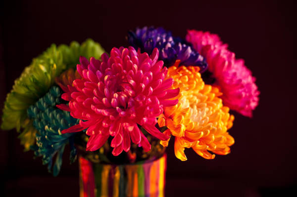 Chest Of Drawers Photograph - Multicolored Chrysanthemums In Paint Can On Chest Of Drawers Int by Jim Corwin