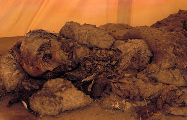 Wall Art - Photograph - Mummified Remains From Al-fustat by Pascal Goetgheluck/science Photo Library
