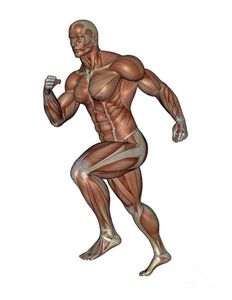 Muscle Tissue Digital Art - Muscular Man Running by Elena Duvernay