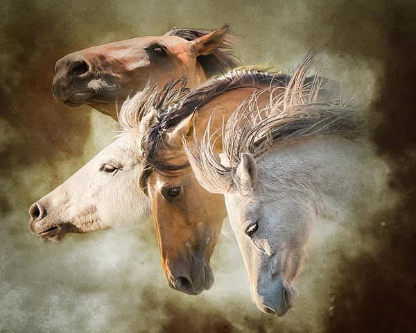 Wall Art - Photograph - Mustang Run by Ron  McGinnis