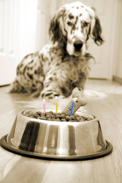 Dog Treat Photograph - My Best Friend's Birthday by Alexey Stiop