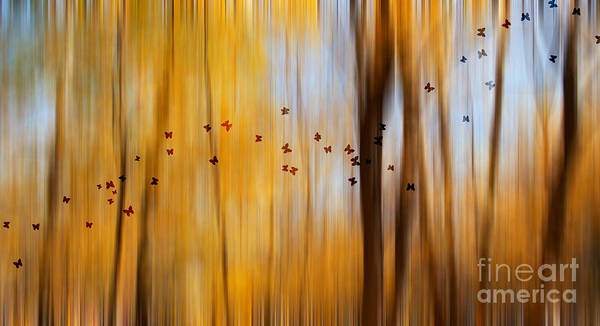 Photograph - Mystic Forest by Rima Biswas