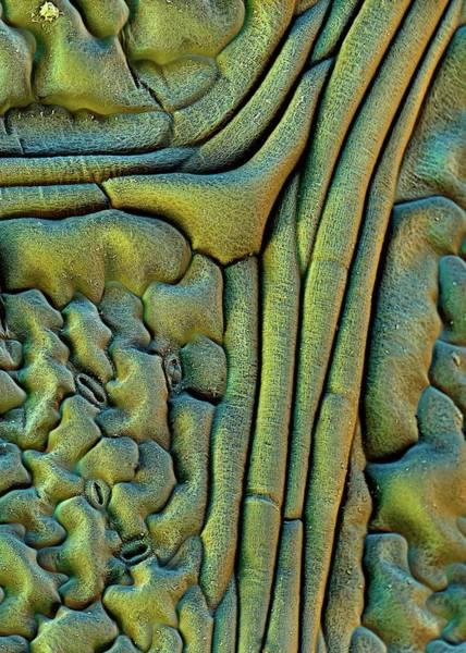 Nasturtiums Wall Art - Photograph - Nasturtium Leaf Surface by Stefan Diller