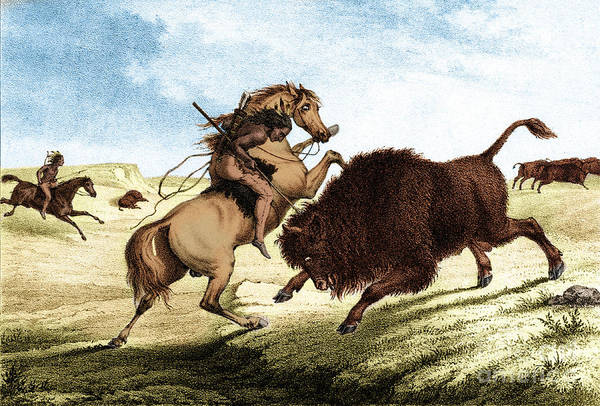 Mounted Shooting Photograph - Native American Indian Buffalo Hunting by Photo Researchers