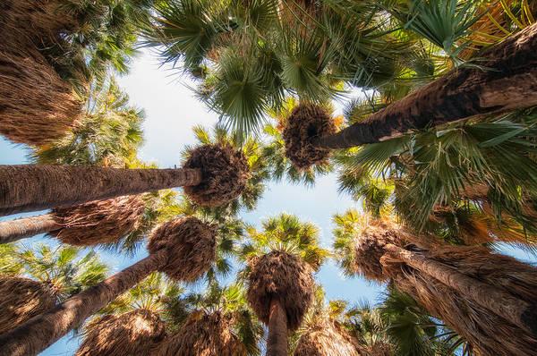 Wall Art - Photograph - Native Desert Fan Palms by Rich Leighton