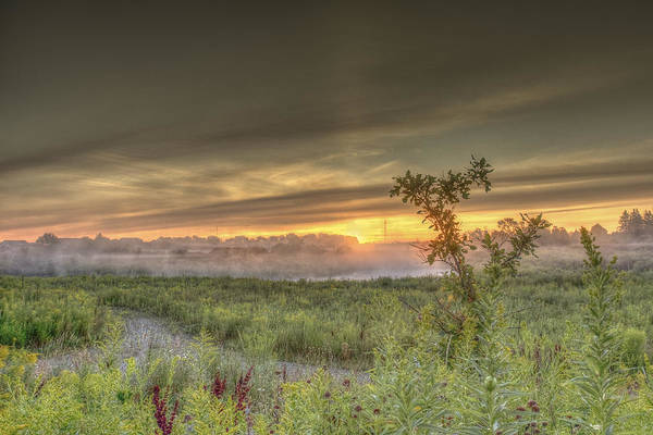 Nature In The Morning Art Print