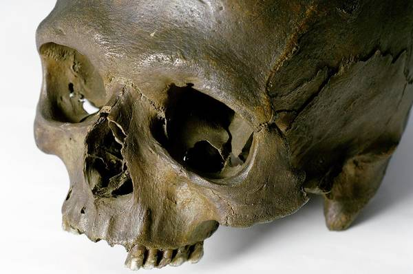 Homo Sapiens Photograph - Neolithic Human Skull by Paul Avis/science Photo Library