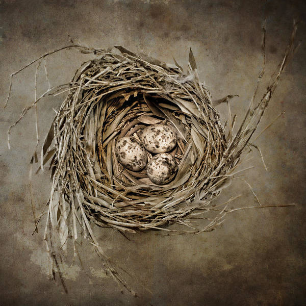 Birds Eggs Photograph - Nest Eggs by Carol Leigh