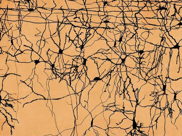 Wall Art - Photograph - Neuron Network, Artwork by Juan Gaertner