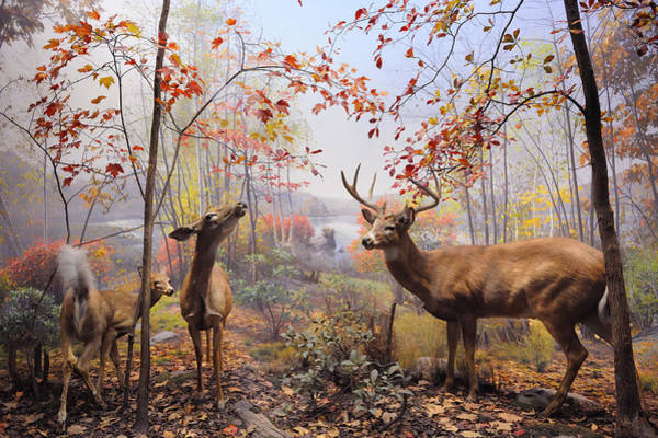 Photograph - New York City American Museum Of Natural History Collection by Songquan Deng