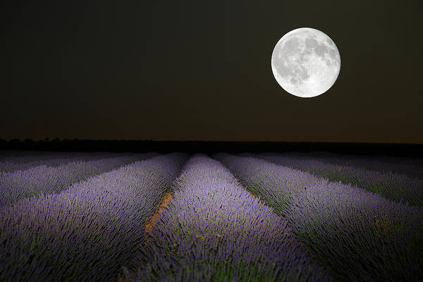 Paisaje Photograph - Night Scene With Moon In Lavender Field by David Santiago Garcia
